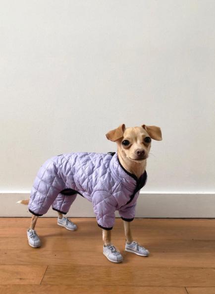 A gazdi elárulta a neten, hogy már korábban is sokan felfigyeltek a kutyus öltözékeire, és többen azt mondták, Boobie Billie egy igazi ikon. Innen is jött a saját Instagram-oldal ötlete.