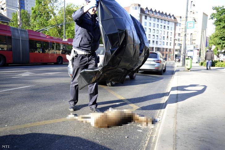 Az elgázolt őzet takarja le fóliával egy rendőr a Kálvária téren 2020. április 27-én.