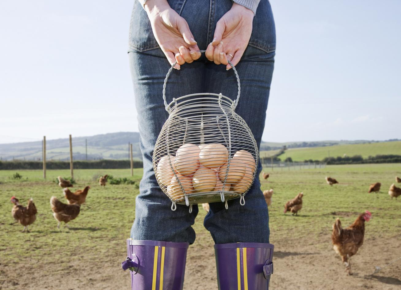 tojás tyúkok szabad tartás