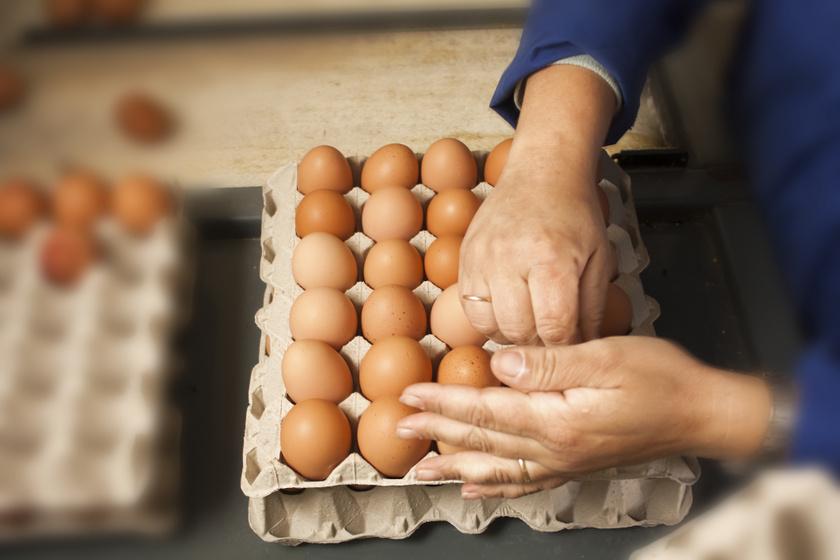 tojás tartóban