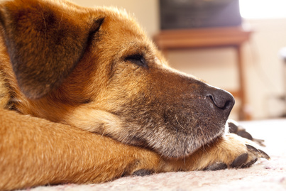 idos-kutya