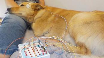 Leépülést jelezhet az alvó agy aktivitása az állatoknál