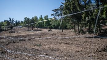 Feljelentést tett az önkormányzat a normafai fakivágások miatt