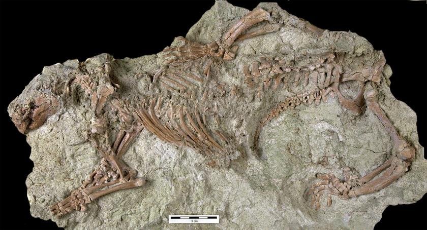 fosszilia