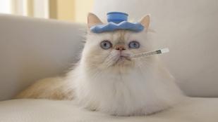Így add be a gyógyszert a macskádnak
