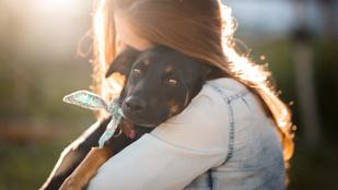 Mire figyelj, ha a karantén alatt fogadnál be kutyát?