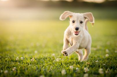 boldog-kutya