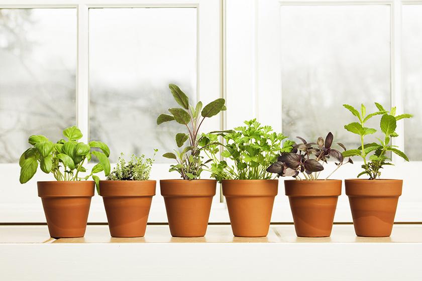 növényct