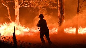 Komoly hatása volt az esőerdők kivágásának az ausztrál bozóttüzekre