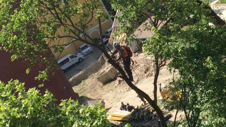 Letarolták a fákat a Margit körúton, a Csodaszarvas térnél, mert irodaház épül