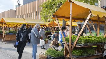 Nyitnak a vidéki piacok, több helyen változnak az idősávok