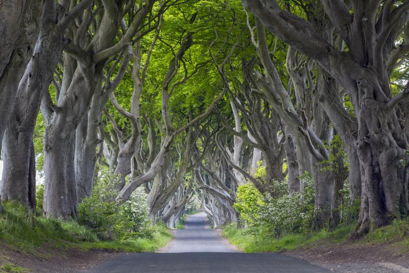 A Dark Hedges, azaz Sötét sövény Észak-Írország izgalmas gyöngyszeme, amely kicsit a fantasyk világát idézi meg, és a kalandok kedvelői látogatják a legszívesebben.