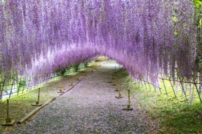 lilaakác alagút Japán