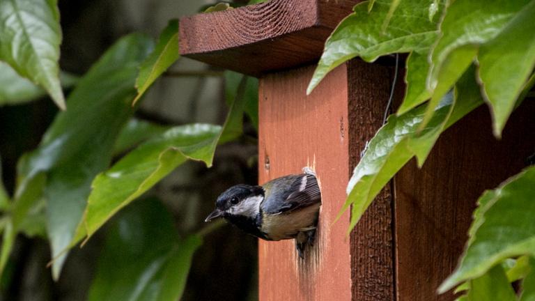 Nem egy gonosz tündér büntetéséből vannak velünk a madarak