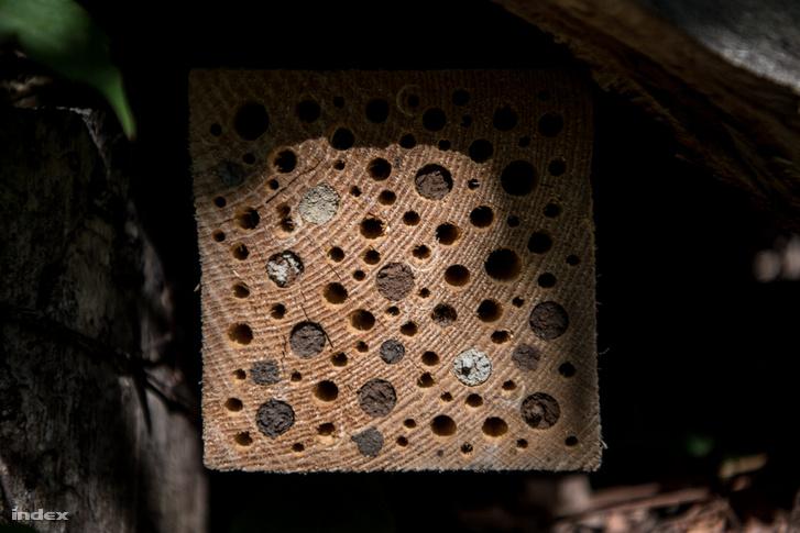 Méhecskehotel vagy darázsgarázs