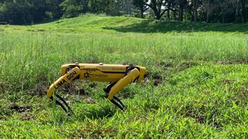 Most lett igazán félelmetes a járvány: megjelentek a Boston Dynamics robotkutyái