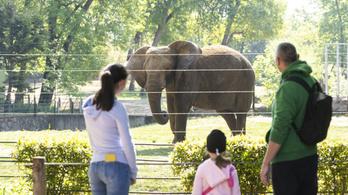 Újra kinyitnak a vidéki állatkertek a hétvégén