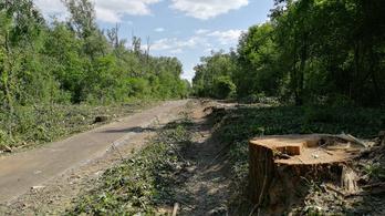 Kegyetlenül irtják a fákat az eddig őserdőnek nevezett bicikliútszakasz mellett, Keszthelynél