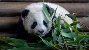 Látogass el a világ állatkertjeibe a kanapédról!
