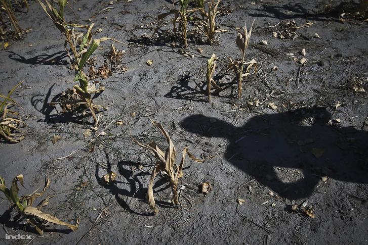 2012-ben is komoly gondot okozott a mezőgazdaságnak a nyári, hosszan tartó száraz időszak