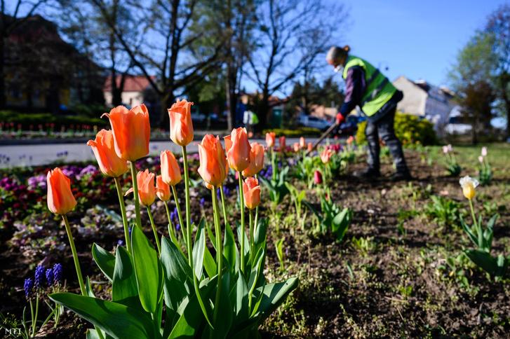 Tatán parkfenntartási és kertészeti munkát végeznek olyan helyi munkavállalók, akik a koronavírus-járvány miatt vesztették el munkájukat.