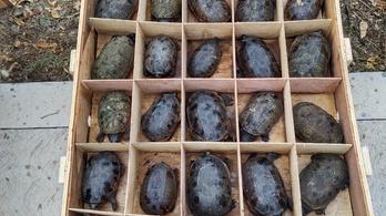 15 ezer teknőst találtak Kínába címzett ládákban Mexikóban