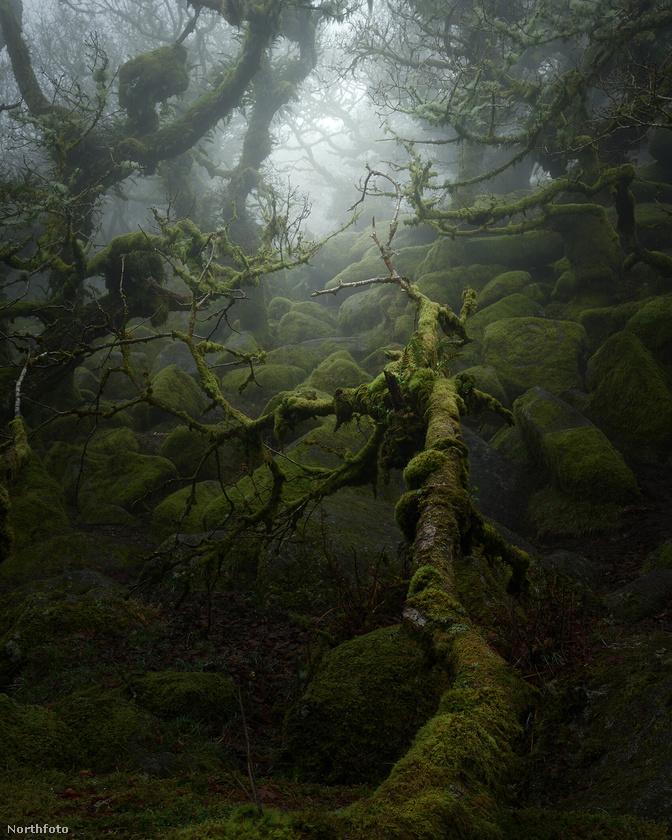 """""""Amikor elkezdtem komolyabban foglalkozni a fotózással, elhatároztam, hogy visszamegyek, és megpróbálom filmes stílusban megörökíteni az erdőt, ahogyan az emlékeimben él"""