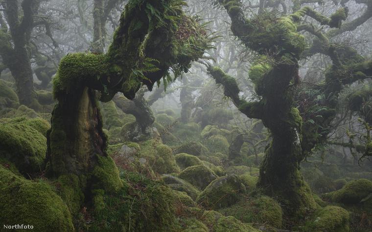 Burnell ugyanis beleszeretett egy Dartmoori (Devon, Nagy-Britannia) tölgyerdőbe, és elképzelte, milyen fantasztikus képeket tudna készíteni ott