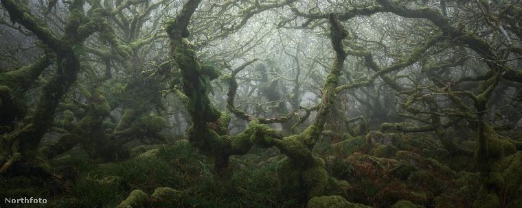 Egy Neil Burnell nevű angol fotós négy évig dolgozott azon, hogy megvalósítsa az álmát, amelyet ebben a galériában tekinthetnek meg.