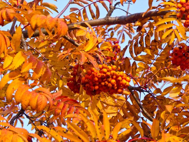 Őszi termés