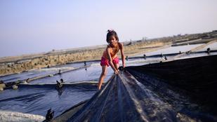 A járvány gazdasági hatásai miatt nőhet a gyerekmunka is