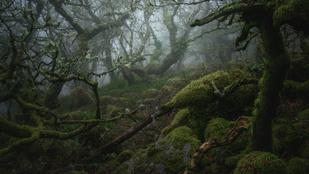 Négy évig várt ezekre a képekre egy angliai fotós