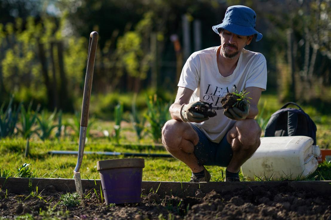 Egy férfi kertészkedik egy angliai kisvárosban a karantén ideje alatt 2020 áprilisában.