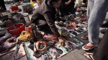 A WHO nem támogatja az élőállat-piacok bezárását a vírus miatt