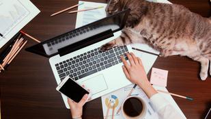 Maradjon-e a home office a járvány után?