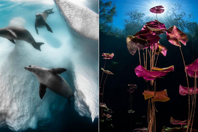 Lebilincselő fotók a természetből: ezek most a legjobbak a szakértők szerint