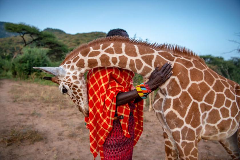 A Fotóriport: Együttélés kategória győztes képe. Védelmező harcosok, Ami Vitale, Kenya.
