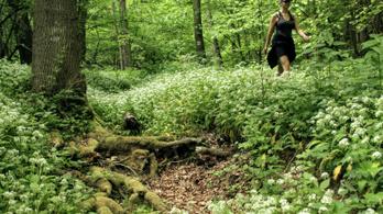 Illatos szabadidős célú gyaloglások a Burok-völgyben és máshol