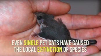 Újabb kutatás bizonyítja, hogy a macskáknak a házban a helyük
