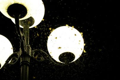 molyok-lampan