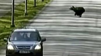 Medvék járják Tallinn utcáit