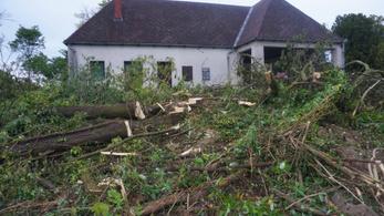 Focipályányi területen vágták ki a fákat a balatonkenesei temetőben