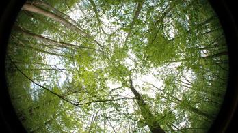 Hősokkot okoznak az erdei élővilágnak a lombkorona hézagai