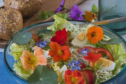 ehető virágok nyitó
