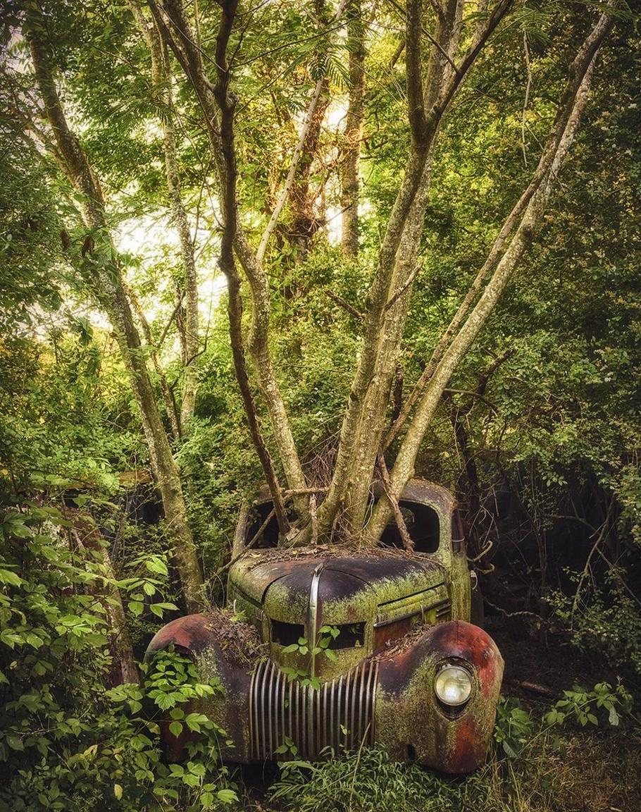 Ezt az 1937-es Chrysler Imperialt már egy jó ideje benőhette a növényzet, tekintve az óriási fából, ami a szélvédő helyén ágaskodik  a magasba. Egyébként ez egy 1937-es évjáratú modell, azaz a negyedik generáció egyik példánya. Ez a kép Amerikában készült.