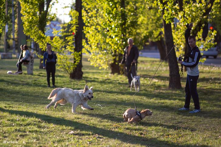Kutyasétáltatók és levegőző emberek a járvány idején Zuglóban, a Rákos patak partján 2020. április 22-én