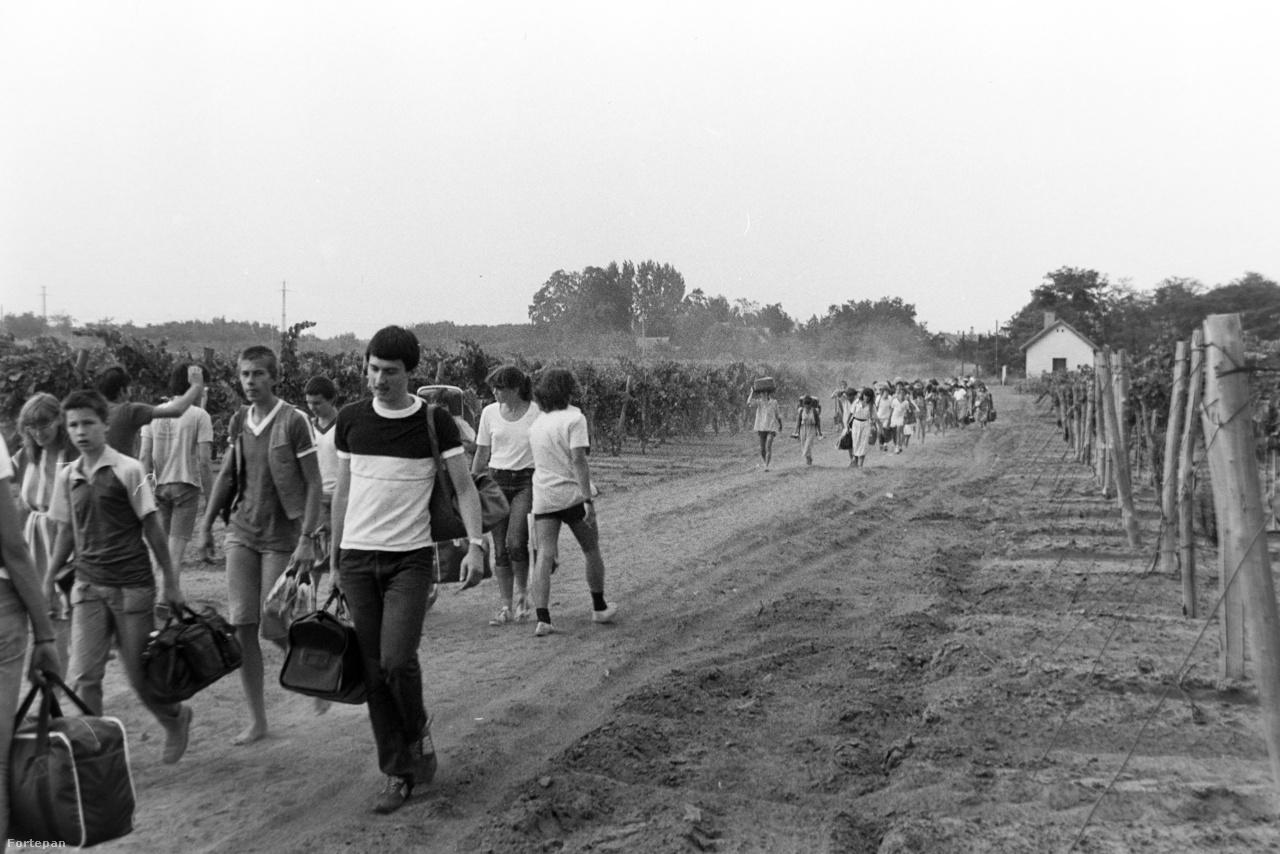 Az építőtábori mozgalom 1958 nyarán indult, az első igazán nagyszabású feladat a Hanság lecsapolása volt. A KISZ által szervezett munkálatokban 1958 és 1972 között 20 ezer fiatal csapott fel csatornát ásó kubikusnak, hogy mezőgazdasági művelésbe lehessen fogni a Fertő-tó körüli területet. A természetre akkoriban inkább egy leigázandó kihívásként tekintettek. A képen a fővárosi Madách Imre Gimnázium tanulói érkeznek bőröndjeikkel a Szikrai Állami Gazdaság lakitelki táborába majd' három évtizeddel később.