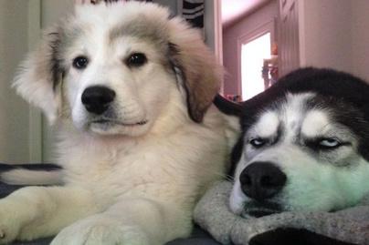 kutya-testvér2 (1)