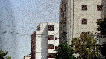 Elsötétíti az eget a sáskajárás Iránban