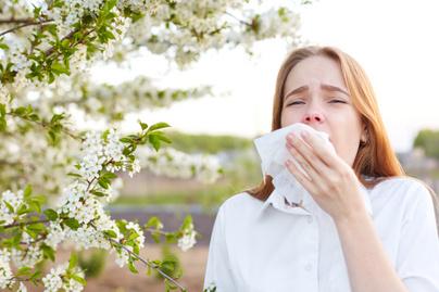 allergia nyitó pollen